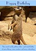 "Meerkat-Happy Birthday - ""You Aren't Really Getting Older"" Theme"